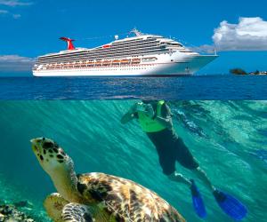 cruise_turtle